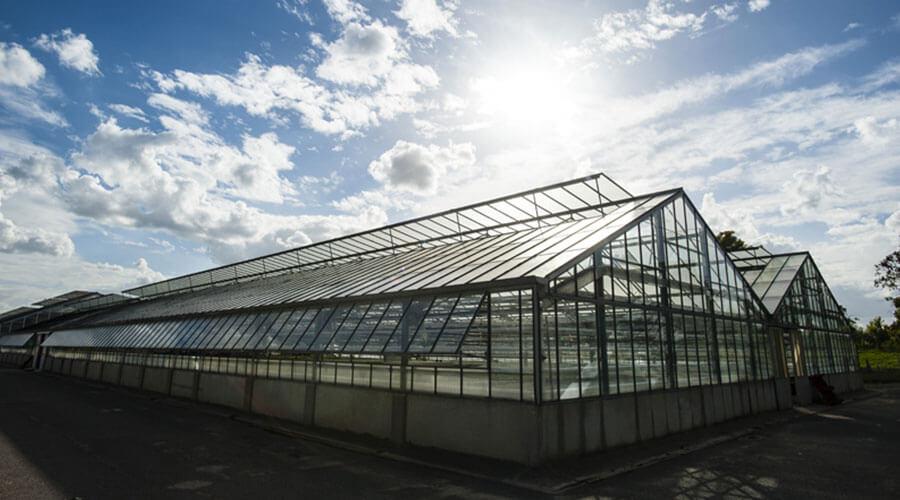 Centre de production horticole à Rungis